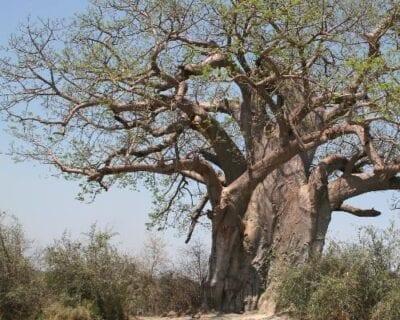 Parque nacional de Khaudom Namibia