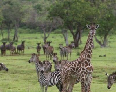 Parque nacional de Saelous Tanzania
