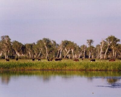 Parque nacional Kakadu Australia