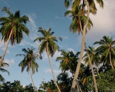 Tulusdhoo Maldivas