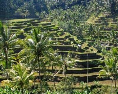 Kubu, Bali Indonesia