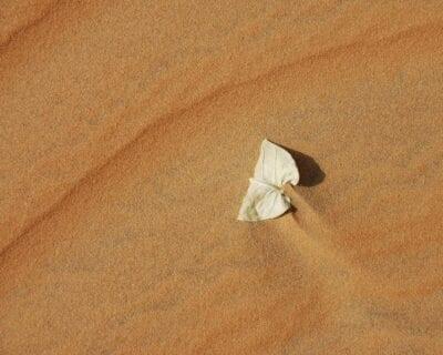 Lompoul Senegal