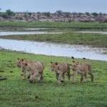 Makgadikgadi Pans Parque Nacional Botswana