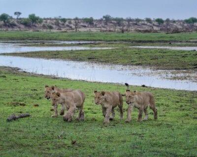 Makgadikgadi Pans Parque Nacional