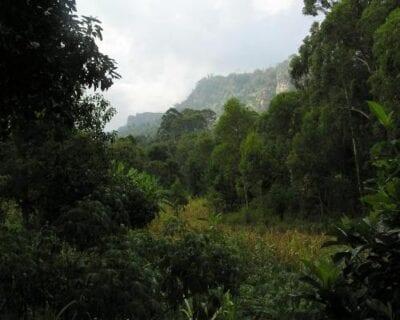 Montañas Usambara Tanzania