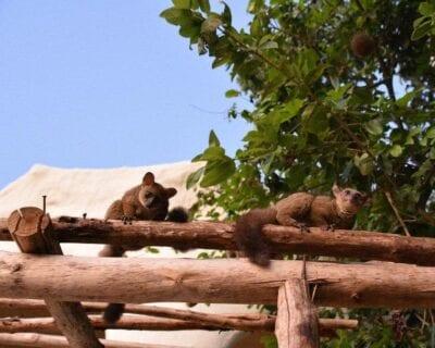 Nungwi Tanzania