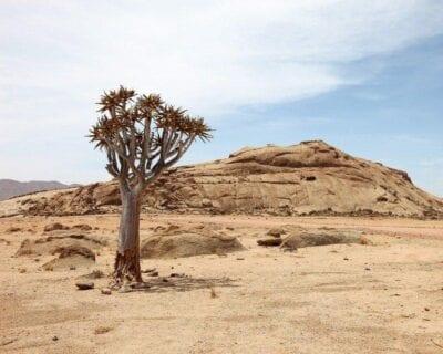 Okazizi Namibia