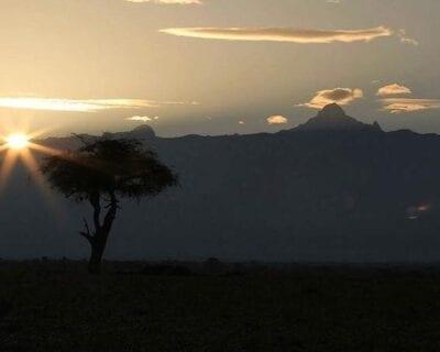 Ol Pejeta Kenia