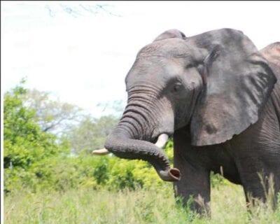Parque nacional Ruaha Tanzania