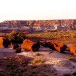 Petrified Forest Parque Nacional AZ Estados Unidos
