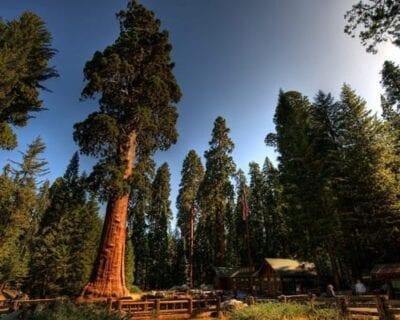 Redwood: Parque Nacional CA Estados Unidos