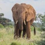 Reserva nacional de Samburu Kenia