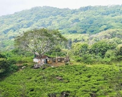 Sinharaja Sri Lanka