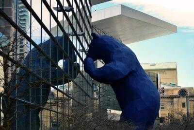 Azul Oso Denver Estados Unidos