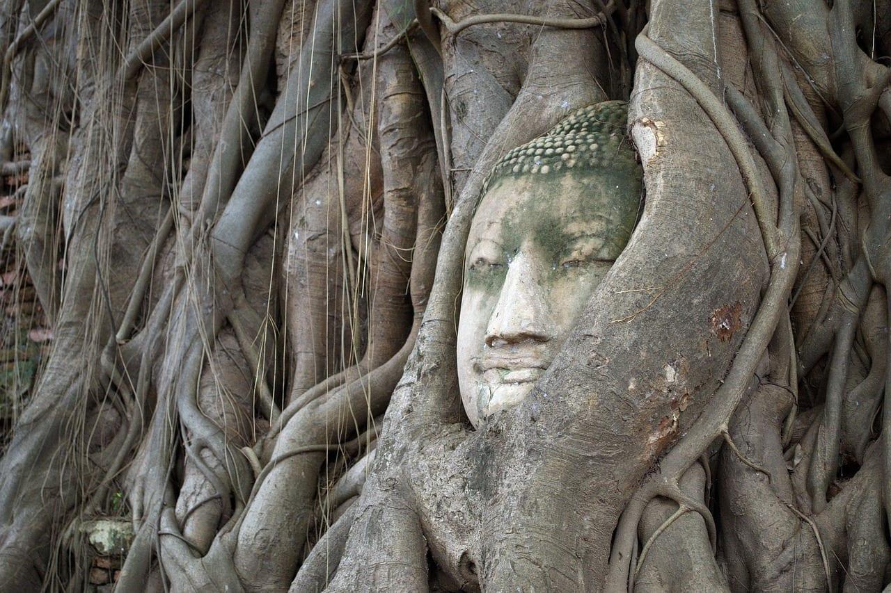 Cabeza Del Dios árbol De Bodhi Ayutthaya Tailandia