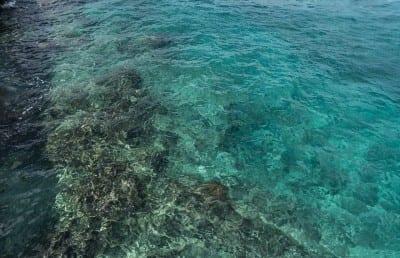 Cozumel Mexico Arrecife De Coral México