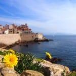 Diente De León Antibes Riviera Francés Francia
