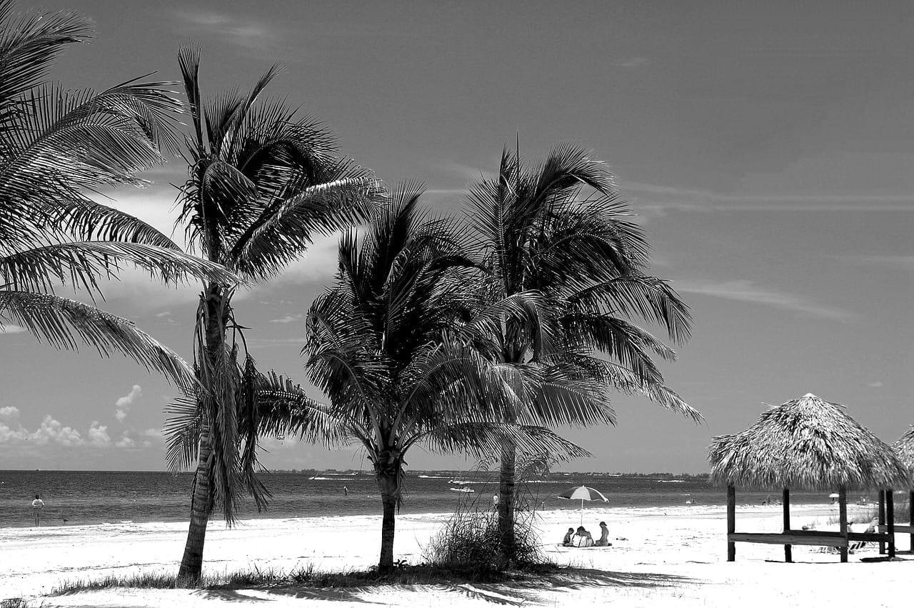 Fort Myers Beach Florida Palmeras Estados Unidos