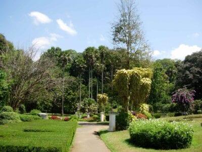 Jardín Botánico de Peradeniya Kandy Sri Lanka