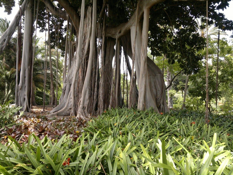 Jardín Botánico Puerto de la Cruz, Tenerife España