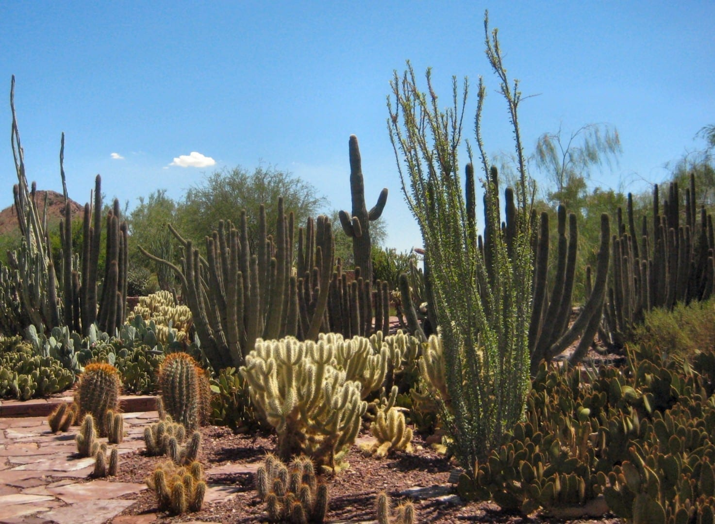 Jardines Botánicos del Desierto Phoenix AZ Estados Unidos