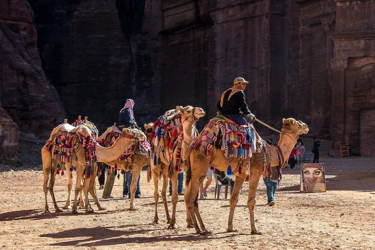 Jordania Petra Camel Jordania