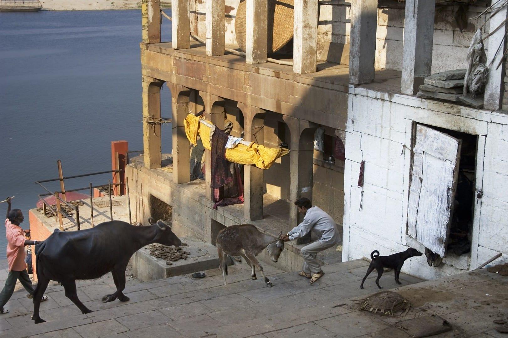 La escena de la calle Varanasi en el Ganges Varanasi / Benares India