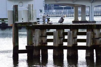Muelles Riverwalk Tampa Estados Unidos