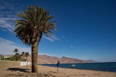 Palma Dahab Desierto Egipto