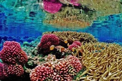 Recife Arrecife De Coral Mar Brasil
