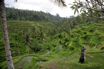 Terrazas de arroz cerca de Ubud Ubud, Bali Indonesia