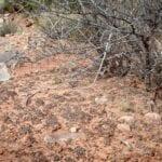 Tomando siglos para formarse, el suelo negro y crujiente criptobiótico enriquece la tierra y permite que otras plantas del desierto echen raíces. Arcos Parque Nacional Estados Unidos