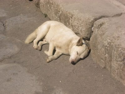 Un perro salvaje dormido Pompei Italia