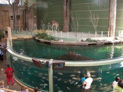 Zoológico de Calgary Calgary Canadá