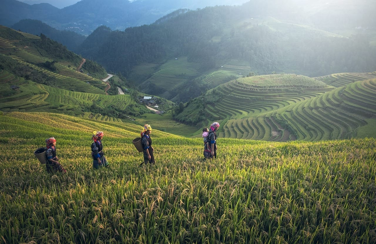 Agricultura Asia Bali Indonesia