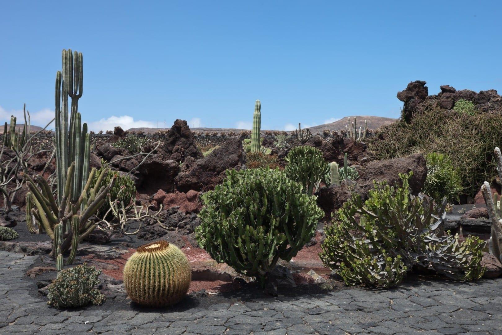 Algunas de las plantas que crecen fácilmente en Lanzarote, en el Jardín de Cactus en Guatiza Lanzarote (Islas Canarias) España