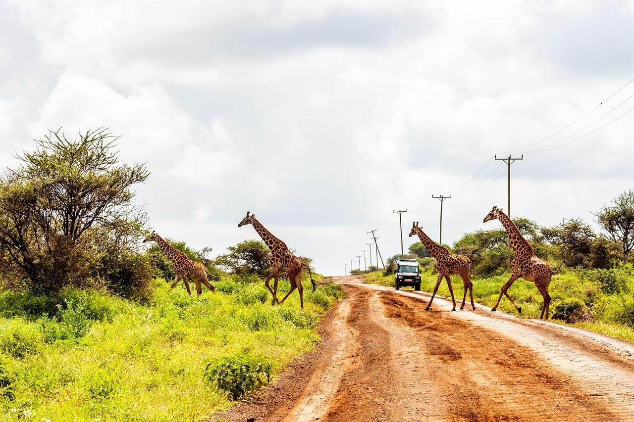 Amboseli El Parque Nacional De Amboseli Kenya Kenia