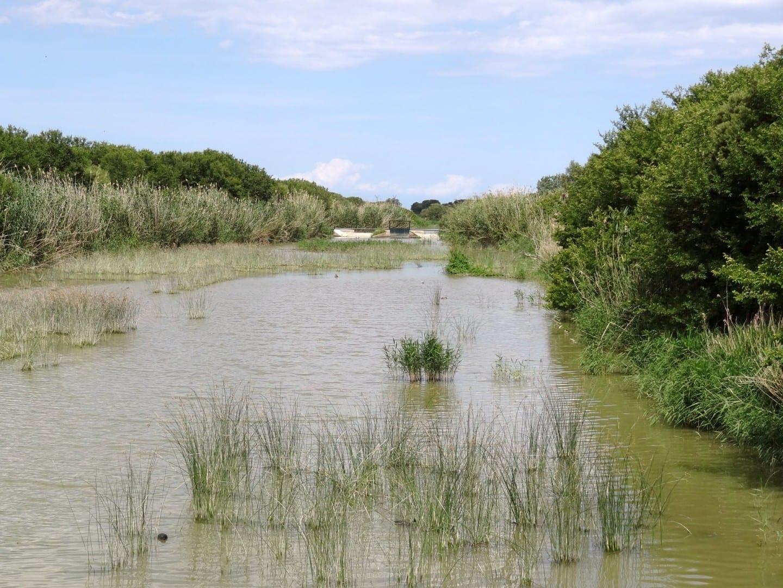 Canal Gran de s'Albufera en el Parc natural de s'Albufera de Mallorca Alcudia, Mallorca España