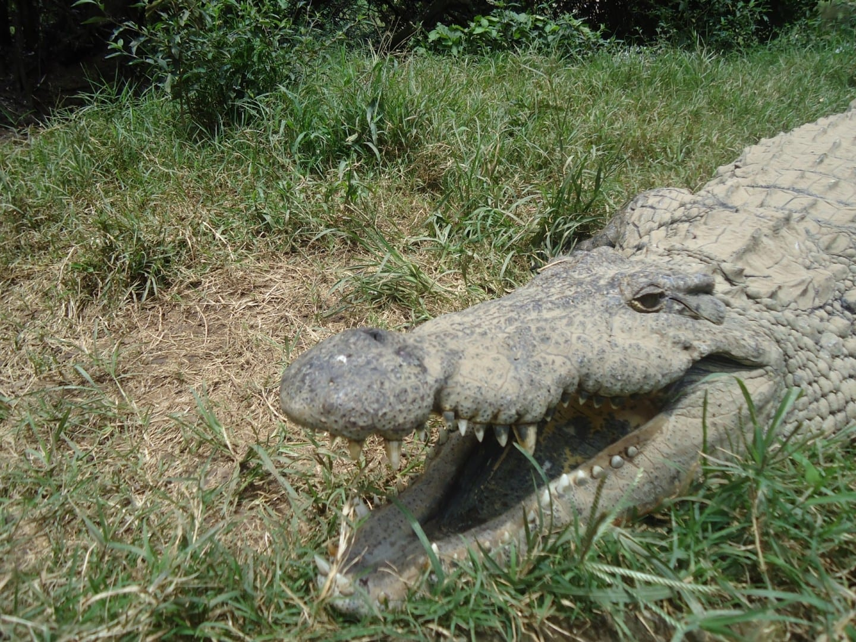 Cocodrilo de Croc'Farm Antananarivo Madagascar