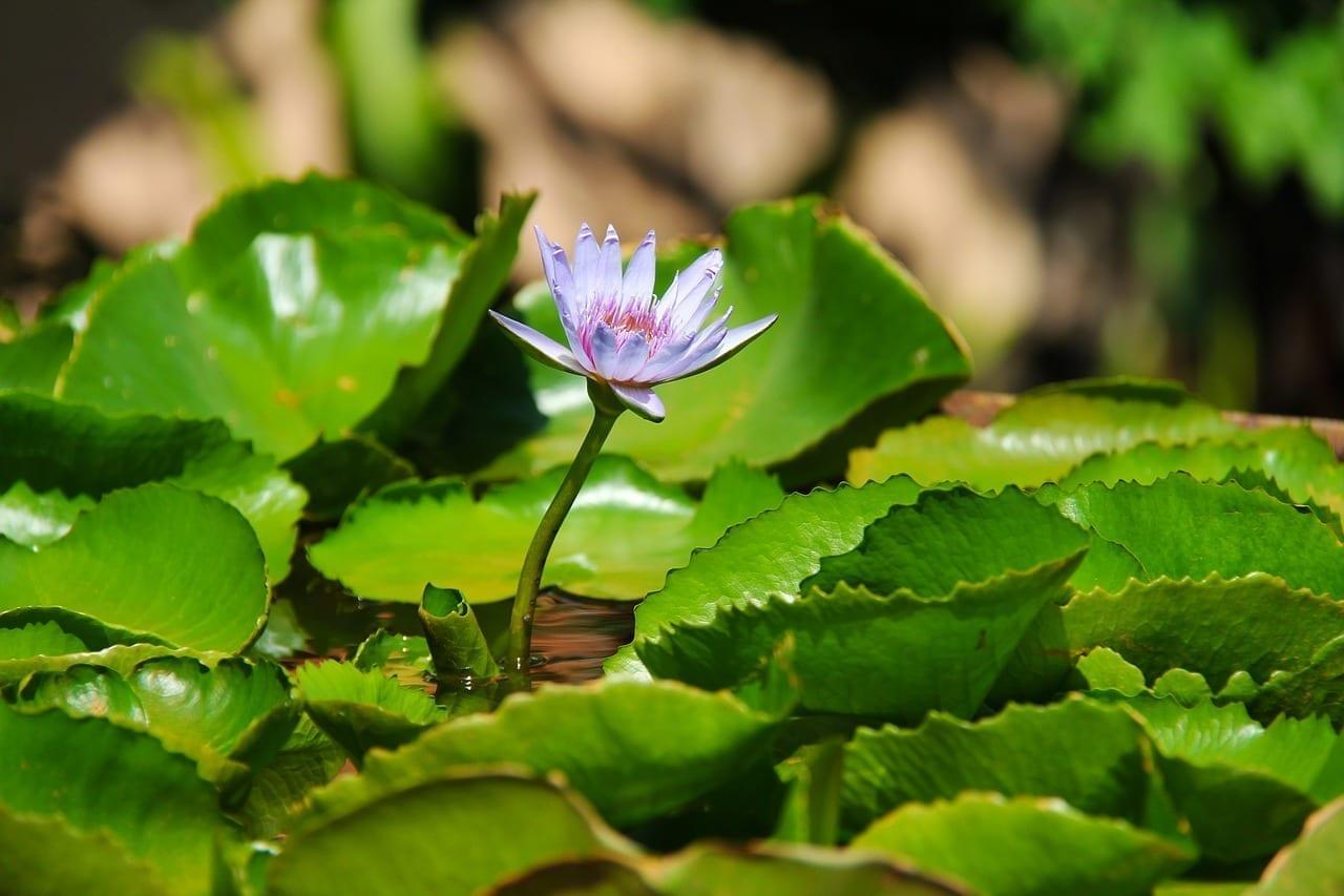 Complejo Anantara Hua Hin Tailandia