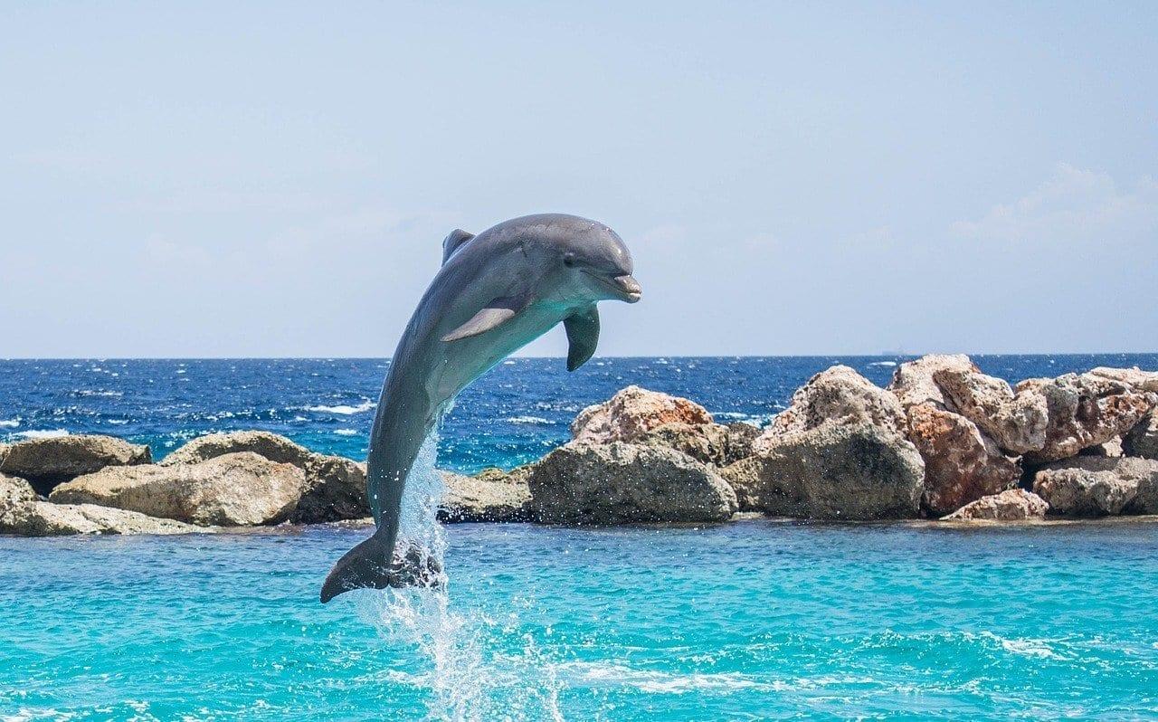 Delfín Acuario Saltar Argentina