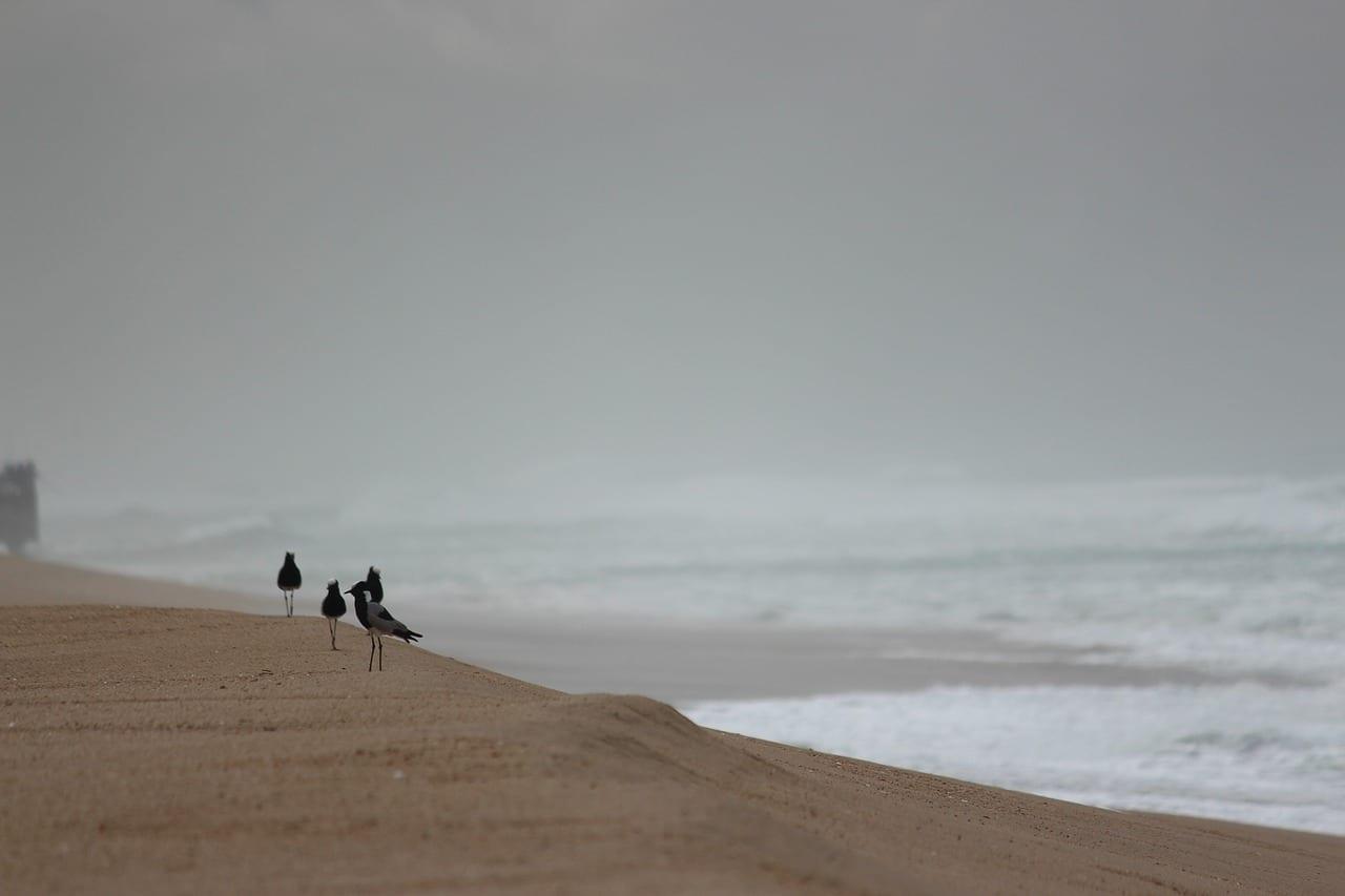 Durban Playa Pájaro De Playa República de Sudáfrica