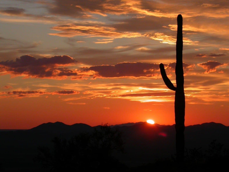 El cactus Saguaro al atardecer Saguaro Parque Nacional AZ Estados Unidos