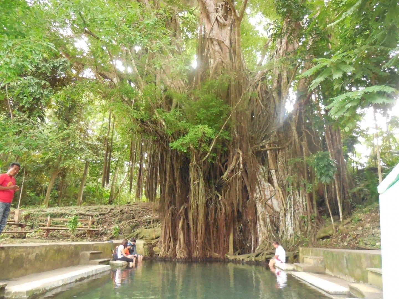 El centenario árbol Balete Encantado Siquijor Filipinas