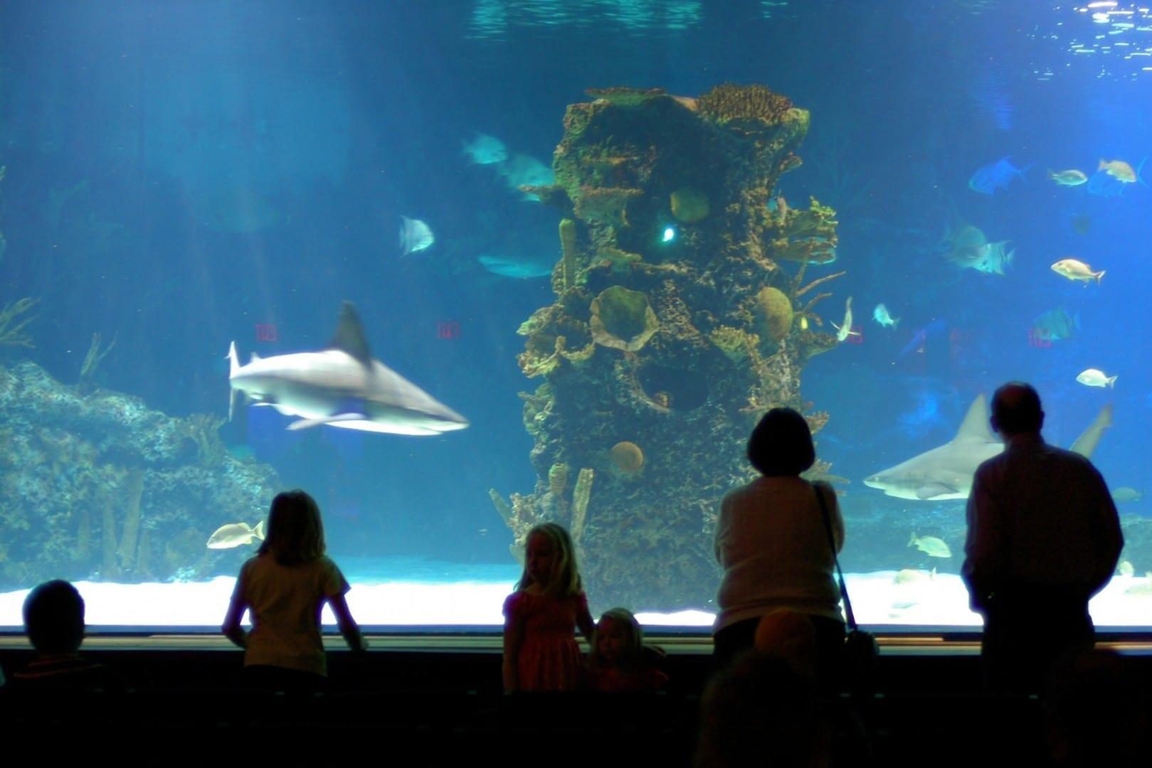 El encantador acuario de Newport Newport KY Estados Unidos