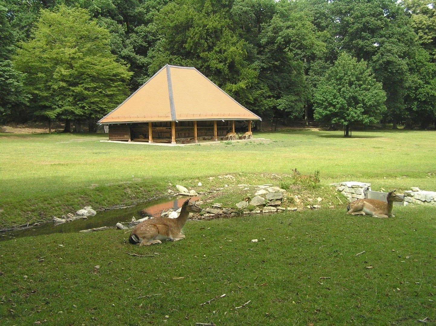 El Hirschgarten es fiel a su nombre, con ciervos reales (Hirsch) Bad Homburg Alemania