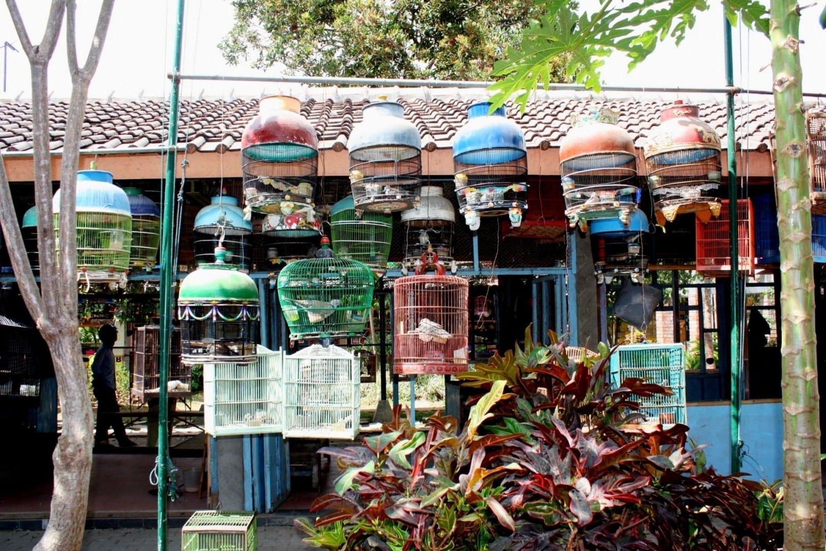El mercado de aves Yogyakarta Indonesia