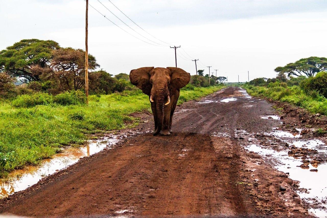 El Parque Nacional De Amboseli Elefantes Kenya Kenia