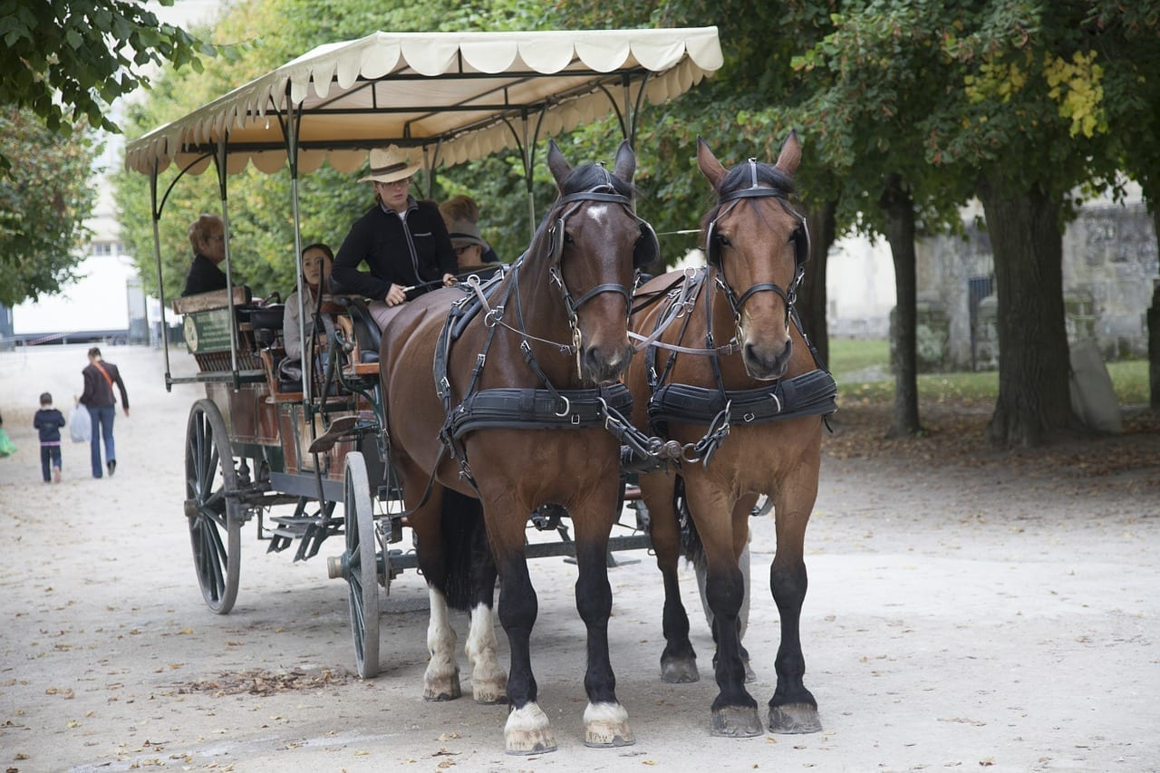 Fontainebleau Carro Paseo Francia
