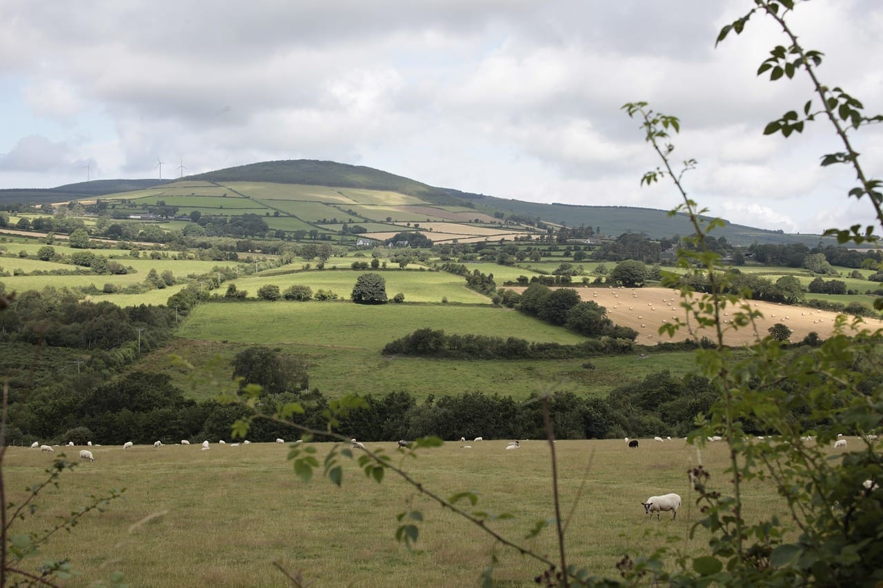 Irlanda Wexford Ovejas Irlanda